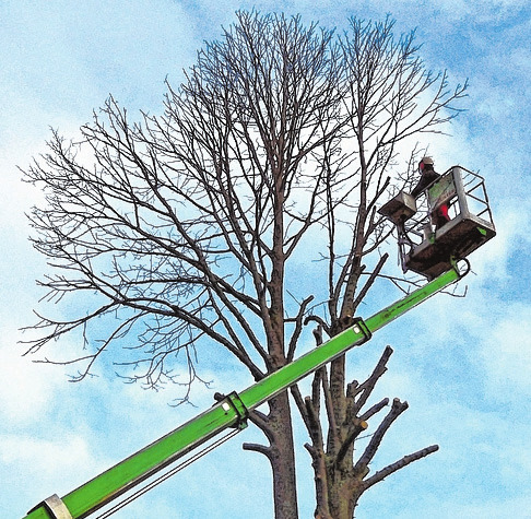 Baumpflege ist eines der Arbeitsfelder des Gartenkunst-Teams. FOTO: HFR/KOLBE